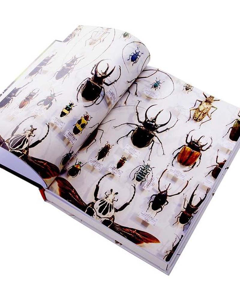 Insects Activity & Puzzle Book