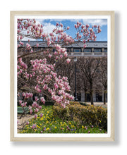 Load image into Gallery viewer, Palais Royal Magnolias, Daffodils, and Tulips - Paris Photography - La Porte Bonheur