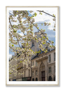 Afternoon Light on the Left Bank - Paris Print - La Porte Bonheur