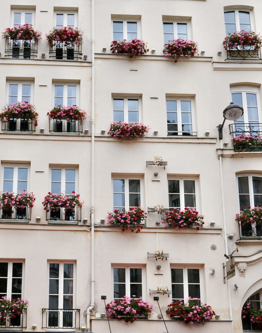 Geraniums on the Left Bank - Paris Print - La Porte Bonheur
