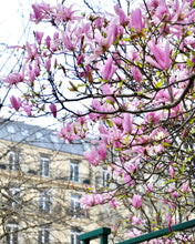 Load image into Gallery viewer, Left Bank Pink Magnolias - Paris Print - La Porte Bonheur