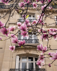 Spring Windows - Paris Print with Magnolias - La Porte Bonheur