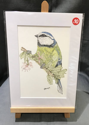 Blue Tit , A4 mounted print