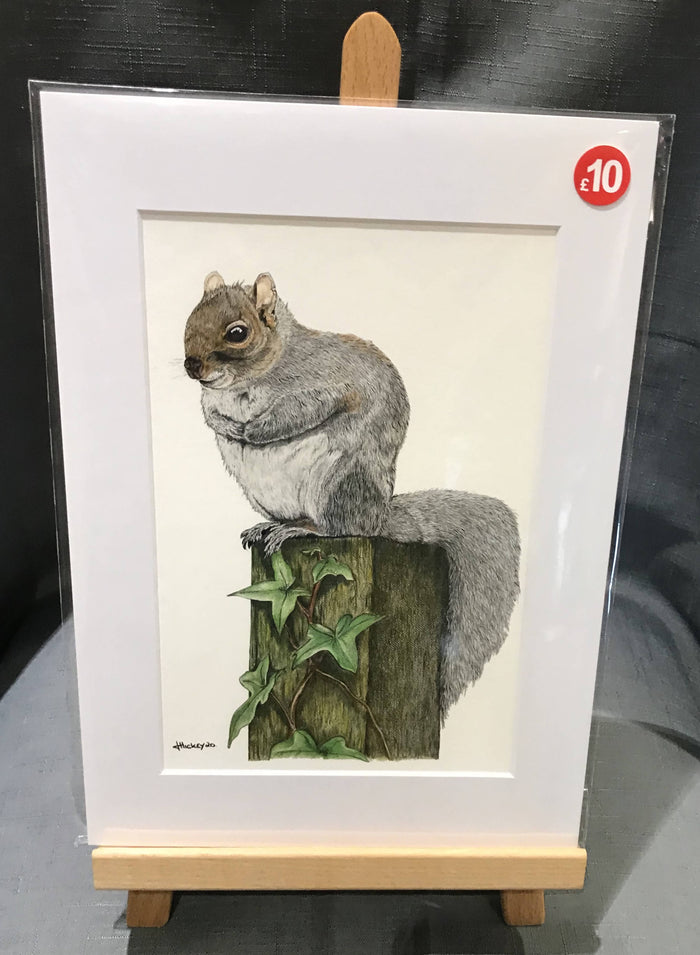 GREY SQUIRREL, A4 MOUNTED PRINT