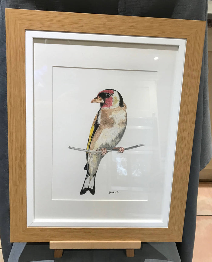 Goldfinch, Original Drawing A3 Framed