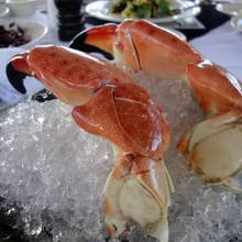 Load image into Gallery viewer, Colossal Stone Crab on Ice