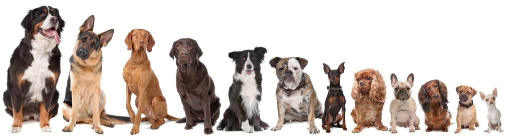 Field Guard sizes to fit every dog