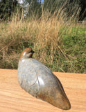 Grey Partridge 4