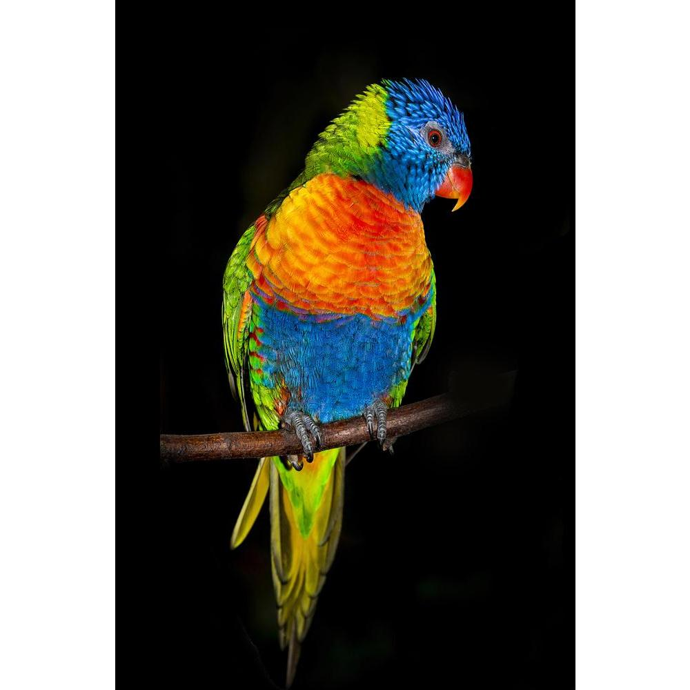 ArtzFolio Rainbow Lorikeet Parrots Unframed Paper Poster-Paper Posters Unframed-AZART40619958POS_UN_L-Image Code 5004702 Vishnu Image Folio Pvt Ltd, IC 5004702, ArtzFolio, Paper Posters Unframed, Birds, Kids, Photography, rainbow, lorikeet, parrots, unframed, paper, poster, wall, large, size, for, living, room, home, decoration, big, framed, decor, posters, pitaara, box, modern, art, with, frame, bedroom, amazonbasics, door, drawing, small, decorative, office, reception, multiple, friends, images, reprints,