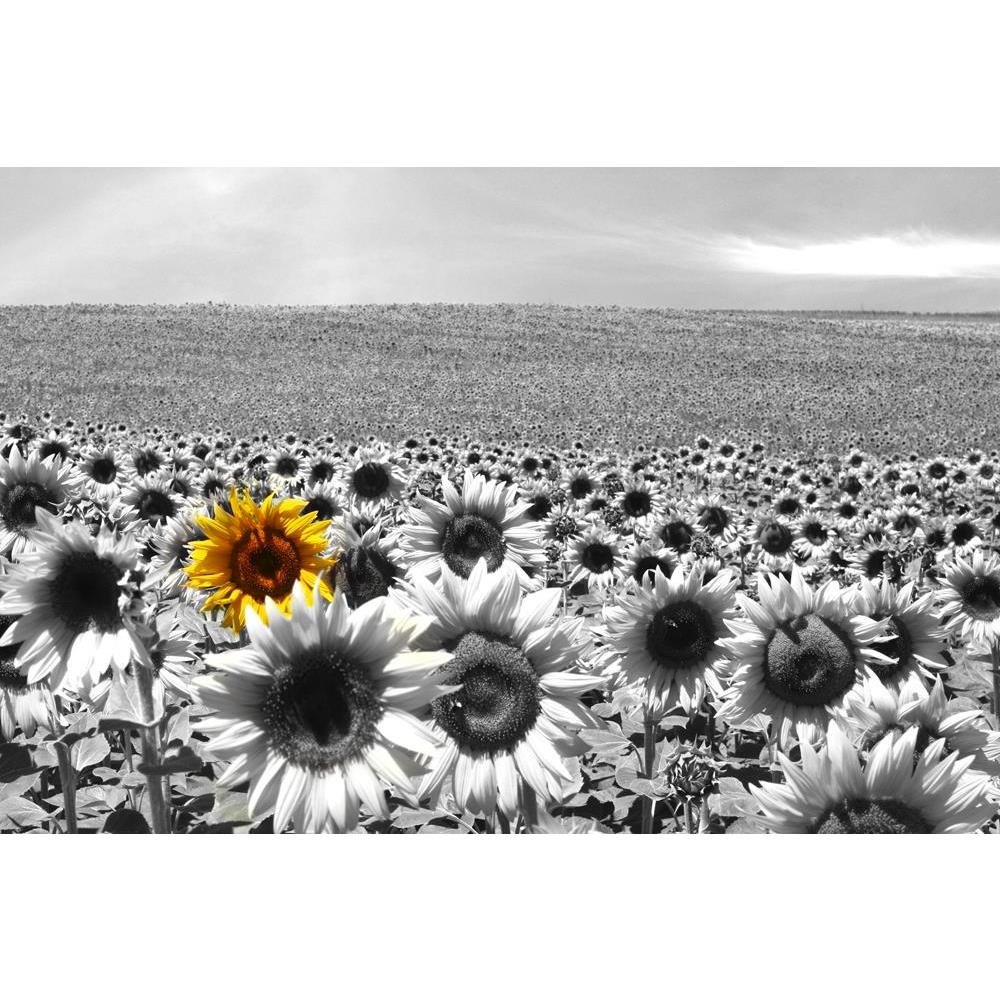 ArtzFolio Sunflower Field Peel & Stick Vinyl Wall Sticker-Laminated Wall Stickers-AZ5005747ART_UN_RF_R-0-Image Code 5005747 Vishnu Image Folio Pvt Ltd, IC 5005747, ArtzFolio, Laminated Wall Stickers, Floral, Photography, sunflower, field, peel, stick, vinyl, wall, sticker, for, bedroom, large, size, decal, drawing, room, living, decorative, big, waterproof, home, office, reception, pitaara, box, designer, prints, kids, pvc, amazonbasics, washable, abstract, self, adhesive, imported, small, decals, kitchen,