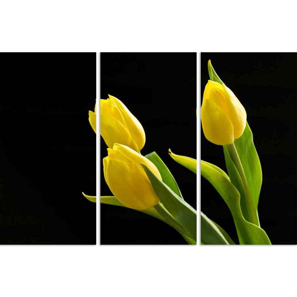 ArtzFolio Beautiful Yellow Tulips On A Black Background Split Art Painting Panel on Sunboard-Split Art Panels-AZ5005770SPL_FR_RF_R-0-Image Code 5005770 Vishnu Image Folio Pvt Ltd, IC 5005770, ArtzFolio, Split Art Panels, Floral, Photography, beautiful, yellow, tulips, on, a, black, background, split, art, painting, panel, sunboard, framed, canvas, print, wall, for, living, room, with, frame, poster, pitaara, box, large, size, drawing, big, office, reception, of, kids, designer, decorative, amazonbasics, rep