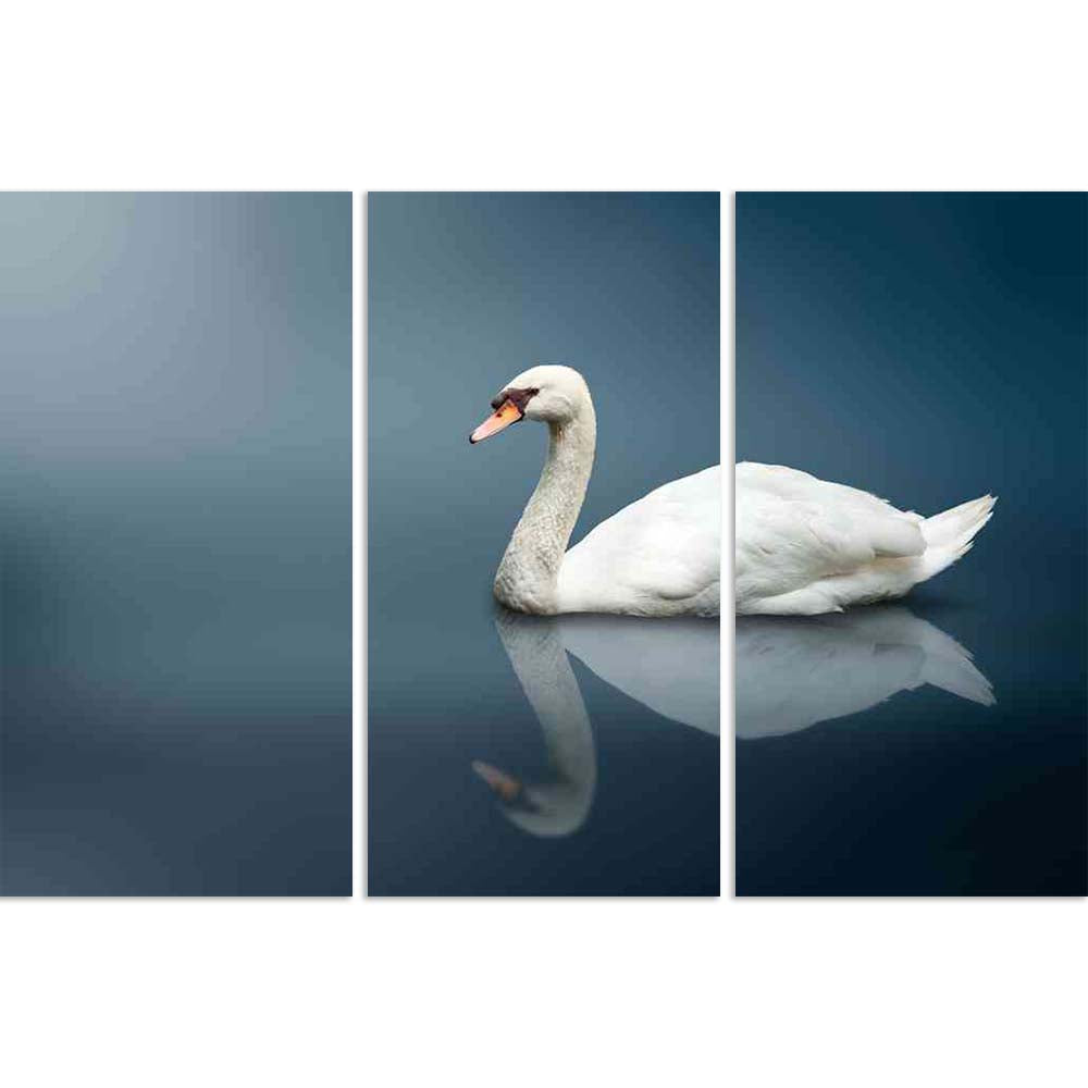 ArtzFolio Mute Swan (Cygnus Olor) Split Art Painting Panel on Sunboard-Split Art Panels-AZ5005775SPL_FR_RF_R-0-Image Code 5005775 Vishnu Image Folio Pvt Ltd, IC 5005775, ArtzFolio, Split Art Panels, Birds, Photography, mute, swan, (cygnus, olor), split, art, painting, panel, on, sunboard, framed, canvas, print, wall, for, living, room, with, frame, poster, pitaara, box, large, size, drawing, big, office, reception, of, kids, designer, decorative, amazonbasics, reprint, small, bedroom, scenery, cygnus, olor,