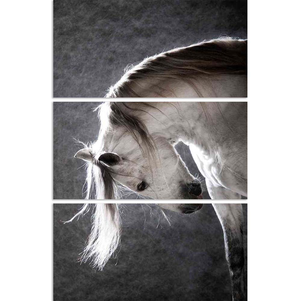 ArtzFolio White Andalusian Horse on a Dark Background Split Art Painting Panel on Sunboard-Split Art Panels-AZ5005781SPL_FR_RF_R-0-Image Code 5005781 Vishnu Image Folio Pvt Ltd, IC 5005781, ArtzFolio, Split Art Panels, Animals, Photography, white, andalusian, horse, on, a, dark, background, split, art, painting, panel, sunboard, framed, canvas, print, wall, for, living, room, with, frame, poster, pitaara, box, large, size, drawing, big, office, reception, of, kids, designer, decorative, amazonbasics, reprin