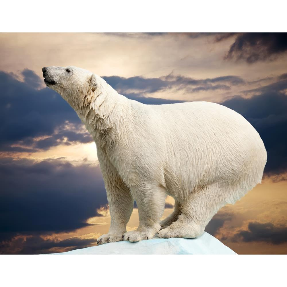 ArtzFolio Polar Bear In Wildness Area Against Sunset Peel & Stick Vinyl Wall Sticker-Laminated Wall Stickers-AZ5005794ART_UN_RF_R-0-Image Code 5005794 Vishnu Image Folio Pvt Ltd, IC 5005794, ArtzFolio, Laminated Wall Stickers, Animals, Photography, polar, bear, in, wildness, area, against, sunset, peel, stick, vinyl, wall, sticker, for, bedroom, large, size, decal, drawing, room, living, decorative, big, waterproof, home, office, reception, pitaara, box, designer, prints, kids, pvc, amazonbasics, washable,