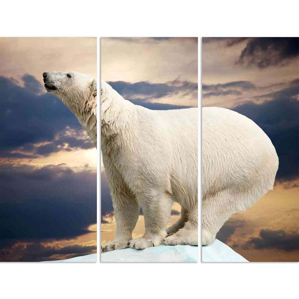 ArtzFolio Polar Bear In Wildness Area Against Sunset Split Art Painting Panel on Sunboard-Split Art Panels-AZ5005794SPL_FR_RF_R-0-Image Code 5005794 Vishnu Image Folio Pvt Ltd, IC 5005794, ArtzFolio, Split Art Panels, Animals, Photography, polar, bear, in, wildness, area, against, sunset, split, art, painting, panel, on, sunboard, framed, canvas, print, wall, for, living, room, with, frame, poster, pitaara, box, large, size, drawing, big, office, reception, of, kids, designer, decorative, amazonbasics, repr