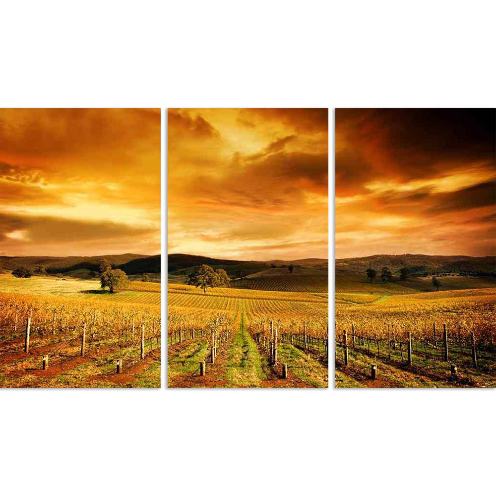 ArtzFolio Sunset Over An Autumn Vineyard In South Australia Split Art Painting Panel on Sunboard-Split Art Panels-AZ5005808SPL_FR_RF_R-0-Image Code 5005808 Vishnu Image Folio Pvt Ltd, IC 5005808, ArtzFolio, Split Art Panels, Landscapes, Places, Photography, sunset, over, an, autumn, vineyard, in, south, australia, split, art, painting, panel, on, sunboard, framed, canvas, print, wall, for, living, room, with, frame, poster, pitaara, box, large, size, drawing, big, office, reception, of, kids, designer, deco