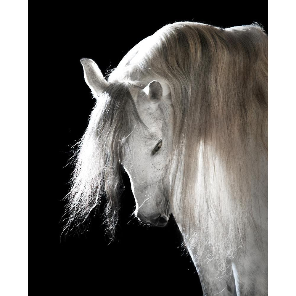ArtzFolio White Andalusian Horse On The Black Background Peel & Stick Vinyl Wall Sticker-Laminated Wall Stickers-AZ5005834ART_UN_RF_R-0-Image Code 5005834 Vishnu Image Folio Pvt Ltd, IC 5005834, ArtzFolio, Laminated Wall Stickers, Animals, Photography, white, andalusian, horse, on, the, black, background, peel, stick, vinyl, wall, sticker, for, bedroom, large, size, decal, drawing, room, living, decorative, big, waterproof, home, office, reception, pitaara, box, designer, prints, kids, pvc, amazonbasics, wa