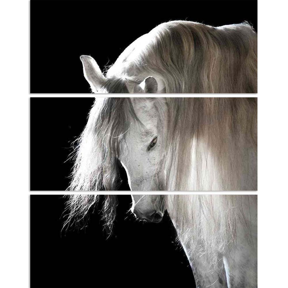 ArtzFolio White Andalusian Horse On The Black Background Split Art Painting Panel on Sunboard-Split Art Panels-AZ5005834SPL_FR_RF_R-0-Image Code 5005834 Vishnu Image Folio Pvt Ltd, IC 5005834, ArtzFolio, Split Art Panels, Animals, Photography, white, andalusian, horse, on, the, black, background, split, art, painting, panel, sunboard, framed, canvas, print, wall, for, living, room, with, frame, poster, pitaara, box, large, size, drawing, big, office, reception, of, kids, designer, decorative, amazonbasics,