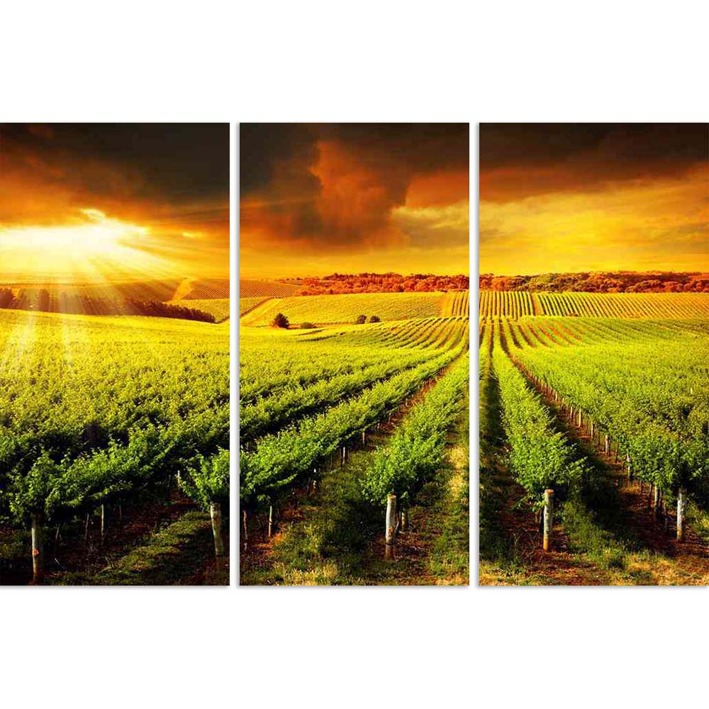 ArtzFolio Sunset Over A Barossa Vineyard Split Art Painting Panel on Sunboard-Split Art Panels-AZ5005859SPL_FR_RF_R-0-Image Code 5005859 Vishnu Image Folio Pvt Ltd, IC 5005859, ArtzFolio, Split Art Panels, Landscapes, Photography, sunset, over, a, barossa, vineyard, split, art, painting, panel, on, sunboard, framed, canvas, print, wall, for, living, room, with, frame, poster, pitaara, box, large, size, drawing, big, office, reception, of, kids, designer, decorative, amazonbasics, reprint, small, bedroom, sc
