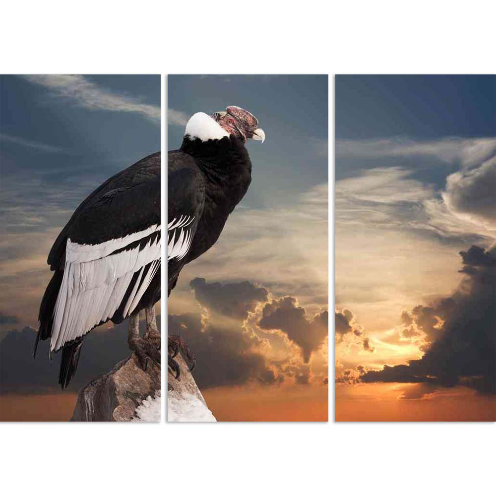 ArtzFolio Andean Condor Sitting On Rock Split Art Painting Panel on Sunboard-Split Art Panels-AZ5005872SPL_FR_RF_R-0-Image Code 5005872 Vishnu Image Folio Pvt Ltd, IC 5005872, ArtzFolio, Split Art Panels, Birds, Photography, andean, condor, sitting, on, rock, split, art, painting, panel, sunboard, framed, canvas, print, wall, for, living, room, with, frame, poster, pitaara, box, large, size, drawing, big, office, reception, of, kids, designer, decorative, amazonbasics, reprint, small, bedroom, scenery, vult