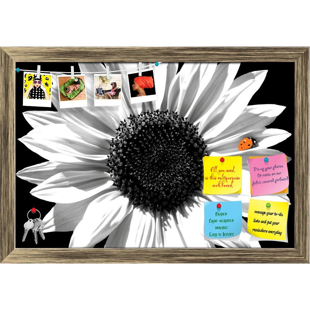 ArtzFolio Black & White Photo of Sunflower With Red Ladybug Printed Bulletin Board Notice Pin Board Soft Board | Framed-Bulletin Boards Framed-AZ5005887BLB_FR_RF_R-0-Image Code 5005887 Vishnu Image Folio Pvt Ltd, IC 5005887, ArtzFolio, Bulletin Boards Framed, Floral, Photography, black, white, photo, of, sunflower, with, red, ladybug, printed, bulletin, board, notice, pin, soft, framed, sunflowers, and, ladybugs, flora, fauna, landscapes, yards, vibrant, yellow, flowers, summer, august, september, perennial