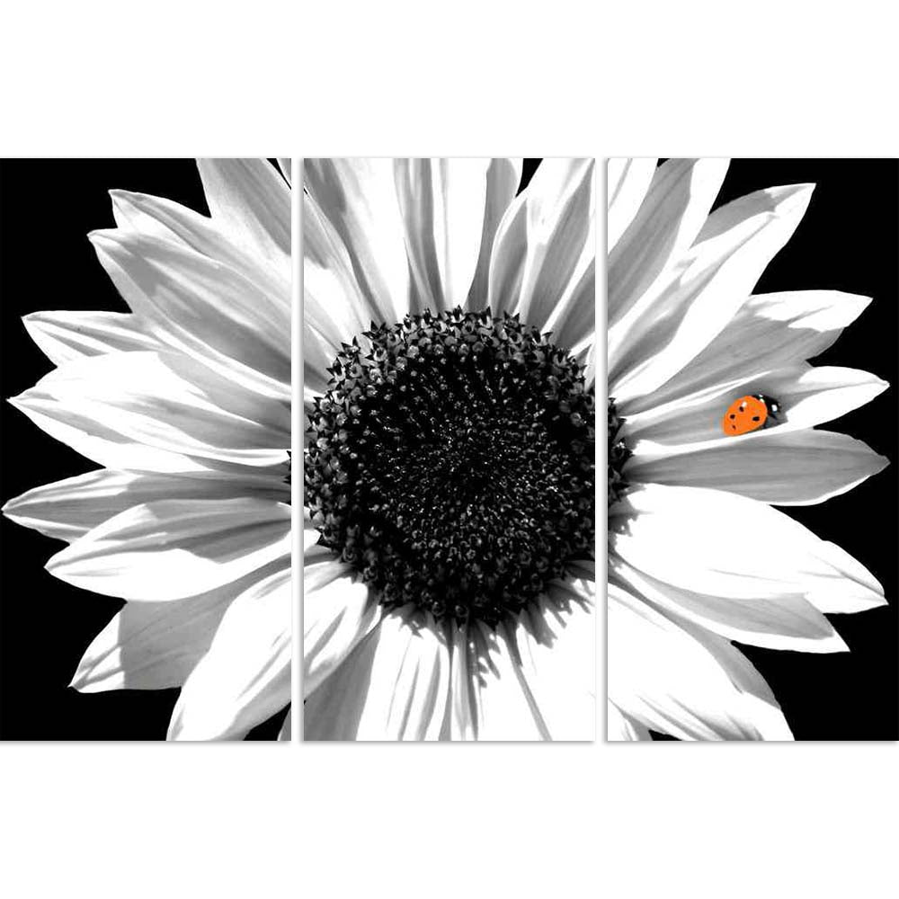 ArtzFolio Black White Photo of Sunflower With Red Ladybug Split Art Painting Panel on Sunboard-Split Art Panels-AZ5005887SPL_FR_RF_R-0-Image Code 5005887 Vishnu Image Folio Pvt Ltd, IC 5005887, ArtzFolio, Split Art Panels, Floral, Photography, black, white, photo, of, sunflower, with, red, ladybug, split, art, painting, panel, on, sunboard, framed, canvas, print, wall, for, living, room, frame, poster, pitaara, box, large, size, drawing, big, office, reception, kids, designer, decorative, amazonbasics, repr
