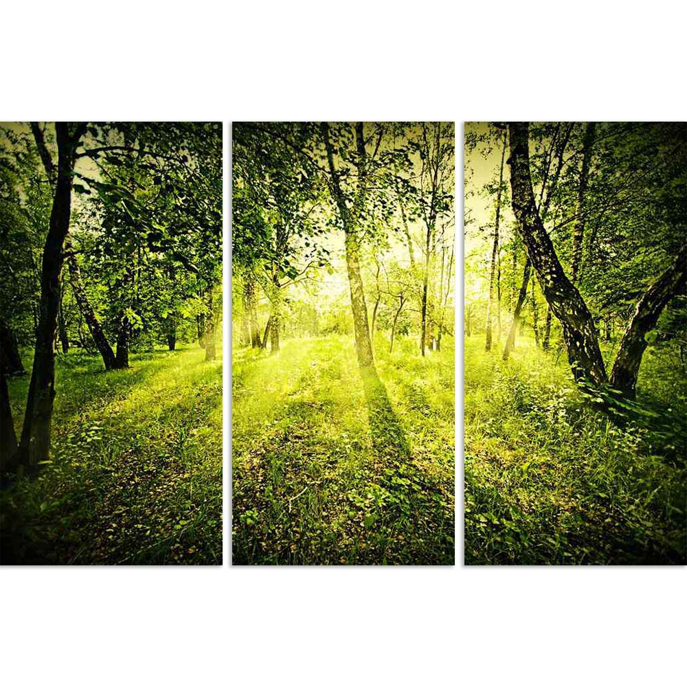 ArtzFolio Fantasy Green Deep Forest On Summer Morning Split Art Painting Panel on Sunboard-Split Art Panels-AZ5005904SPL_FR_RF_R-0-Image Code 5005904 Vishnu Image Folio Pvt Ltd, IC 5005904, ArtzFolio, Split Art Panels, Landscapes, Photography, fantasy, green, deep, forest, on, summer, morning, split, art, painting, panel, sunboard, framed, canvas, print, wall, for, living, room, with, frame, poster, pitaara, box, large, size, drawing, big, office, reception, of, kids, designer, decorative, amazonbasics, rep