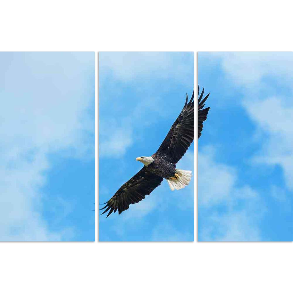 ArtzFolio American Bald Eagle Circling In The Air Split Art Painting Panel on Sunboard-Split Art Panels-AZ5005952SPL_FR_RF_R-0-Image Code 5005952 Vishnu Image Folio Pvt Ltd, IC 5005952, ArtzFolio, Split Art Panels, Birds, Photography, american, bald, eagle, circling, in, the, air, split, art, painting, panel, on, sunboard, framed, canvas, print, wall, for, living, room, with, frame, poster, pitaara, box, large, size, drawing, big, office, reception, of, kids, designer, decorative, amazonbasics, reprint, sma