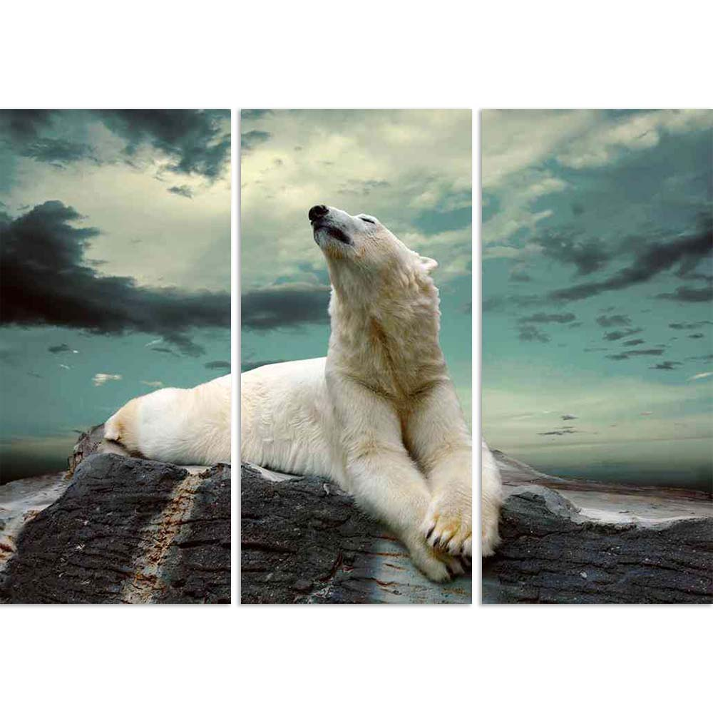 ArtzFolio White Polar Bear Hunte Split Art Painting Panel on Sunboard-Split Art Panels-AZ5005998SPL_FR_RF_R-0-Image Code 5005998 Vishnu Image Folio Pvt Ltd, IC 5005998, ArtzFolio, Split Art Panels, Animals, Photography, white, polar, bear, hunte, split, art, painting, panel, on, sunboard, framed, canvas, print, wall, for, living, room, with, frame, poster, pitaara, box, large, size, drawing, big, office, reception, of, kids, designer, decorative, amazonbasics, reprint, small, bedroom, scenery, aggressive, a