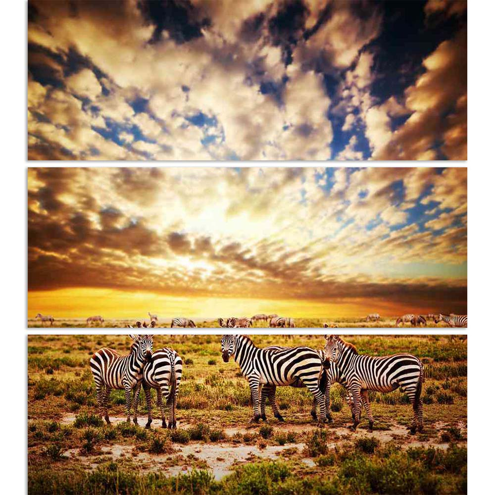 ArtzFolio Zebras Herd At Sunset, Safari in Tanzania, Africa Split Art Painting Panel on Sunboard-Split Art Panels-AZ5006003SPL_FR_RF_R-0-Image Code 5006003 Vishnu Image Folio Pvt Ltd, IC 5006003, ArtzFolio, Split Art Panels, Animals, Landscapes, Photography, zebras, herd, at, sunset, safari, in, tanzania, africa, split, art, painting, panel, on, sunboard, framed, canvas, print, wall, for, living, room, with, frame, poster, pitaara, box, large, size, drawing, big, office, reception, of, kids, designer, decor