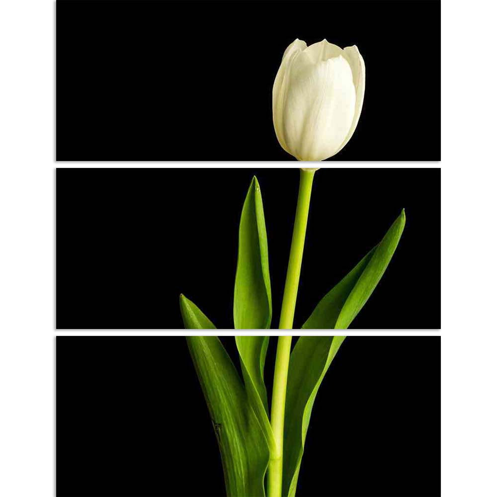 ArtzFolio Fresh Spring White Tulips Over Black Split Art Painting Panel on Sunboard-Split Art Panels-AZ5006030SPL_FR_RF_R-0-Image Code 5006030 Vishnu Image Folio Pvt Ltd, IC 5006030, ArtzFolio, Split Art Panels, Floral, Photography, fresh, spring, white, tulips, over, black, split, art, painting, panel, on, sunboard, framed, canvas, print, wall, for, living, room, with, frame, poster, pitaara, box, large, size, drawing, big, office, reception, of, kids, designer, decorative, amazonbasics, reprint, small, be