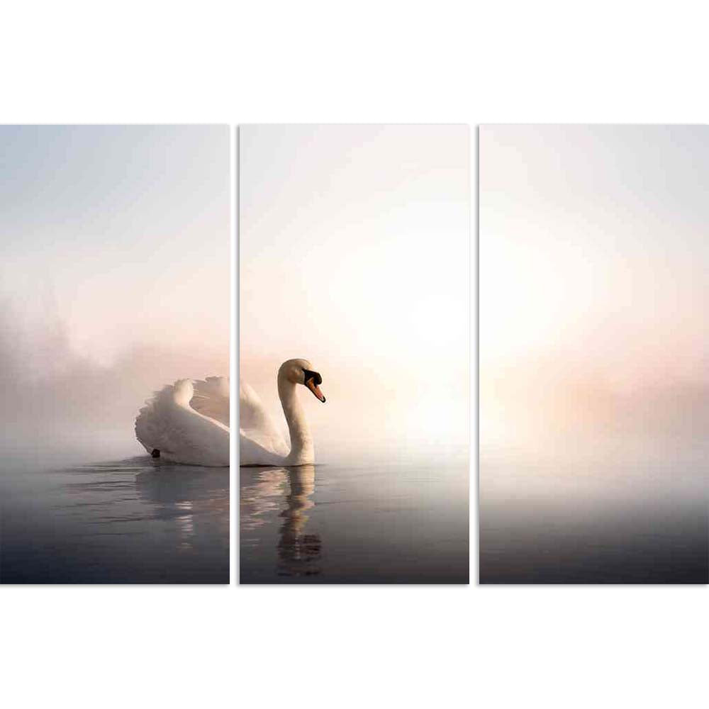 ArtzFolio Swan Floating On The Water At Sunrise Of The Day Split Art Painting Panel on Sunboard-Split Art Panels-AZ5006067SPL_FR_RF_R-0-Image Code 5006067 Vishnu Image Folio Pvt Ltd, IC 5006067, ArtzFolio, Split Art Panels, Birds, Photography, swan, floating, on, the, water, at, sunrise, of, day, split, art, painting, panel, sunboard, framed, canvas, print, wall, for, living, room, with, frame, poster, pitaara, box, large, size, drawing, big, office, reception, kids, designer, decorative, amazonbasics, repr