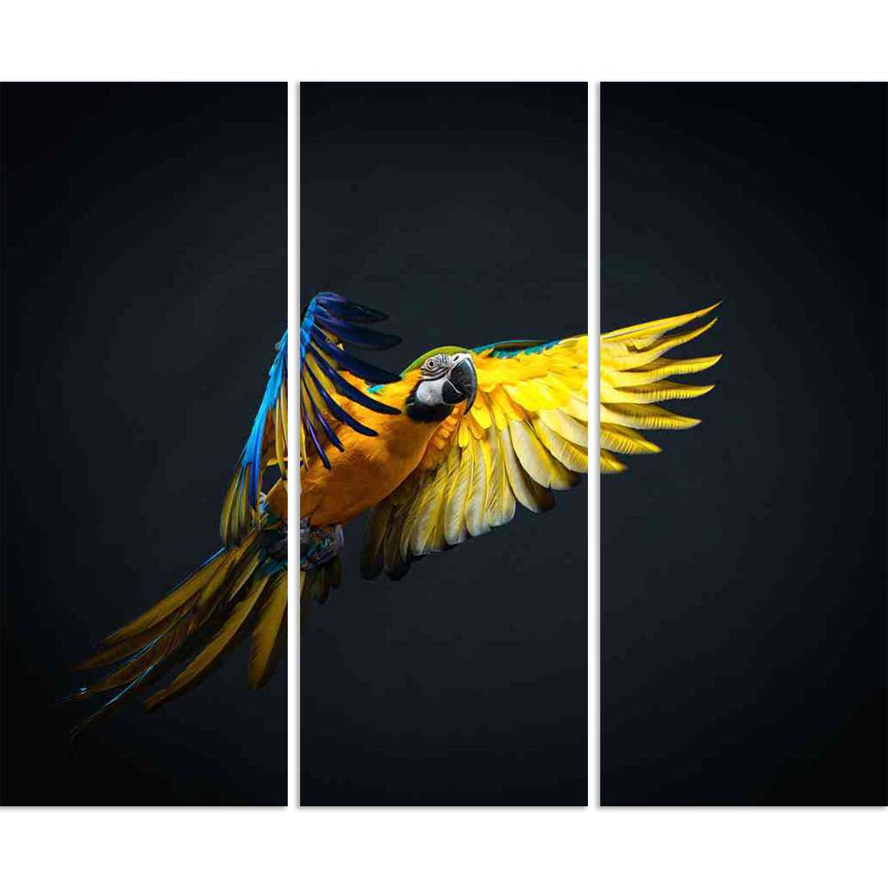 ArtzFolio Colourful Flying Ara Bird Split Art Painting Panel on Sunboard-Split Art Panels-AZ5006093SPL_FR_RF_R-0-Image Code 5006093 Vishnu Image Folio Pvt Ltd, IC 5006093, ArtzFolio, Split Art Panels, Birds, Photography, colourful, flying, ara, bird, split, art, painting, panel, on, sunboard, framed, canvas, print, wall, for, living, room, with, frame, poster, pitaara, box, large, size, drawing, big, office, reception, of, kids, designer, decorative, amazonbasics, reprint, small, bedroom, scenery, air, alon