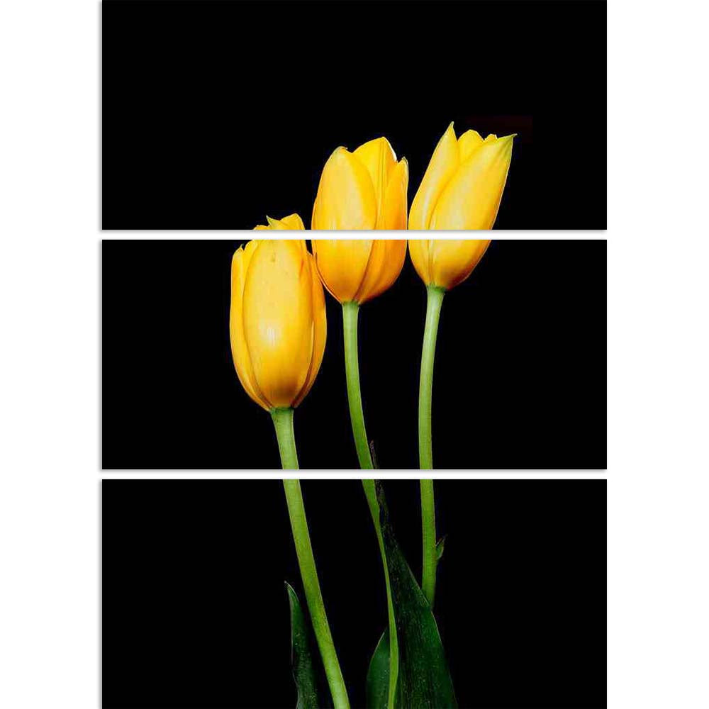ArtzFolio Yellow Tulips Split Art Painting Panel on Sunboard-Split Art Panels-AZ5006326SPL_FR_RF_R-0-Image Code 5006326 Vishnu Image Folio Pvt Ltd, IC 5006326, ArtzFolio, Split Art Panels, Floral, Photography, yellow, tulips, split, art, painting, panel, on, sunboard, framed, canvas, print, wall, for, living, room, with, frame, poster, pitaara, box, large, size, drawing, big, office, reception, of, kids, designer, decorative, amazonbasics, reprint, small, bedroom, scenery, tulip, isolated, bud, netherlands,