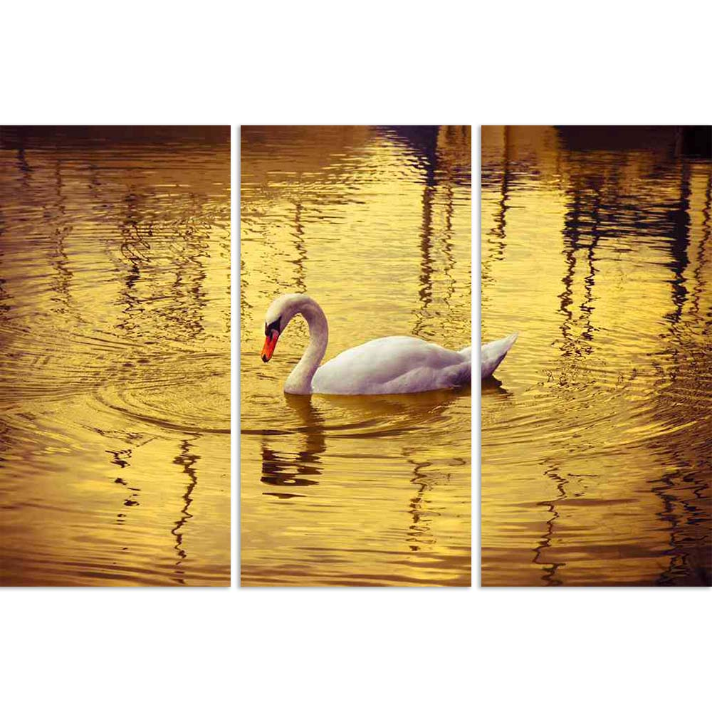 ArtzFolio White Swan In Golden Background Split Art Painting Panel on Sunboard-Split Art Panels-AZ5006376SPL_FR_RF_R-0-Image Code 5006376 Vishnu Image Folio Pvt Ltd, IC 5006376, ArtzFolio, Split Art Panels, Birds, Photography, white, swan, in, golden, background, split, art, painting, panel, on, sunboard, framed, canvas, print, wall, for, living, room, with, frame, poster, pitaara, box, large, size, drawing, big, office, reception, of, kids, designer, decorative, amazonbasics, reprint, small, bedroom, scene