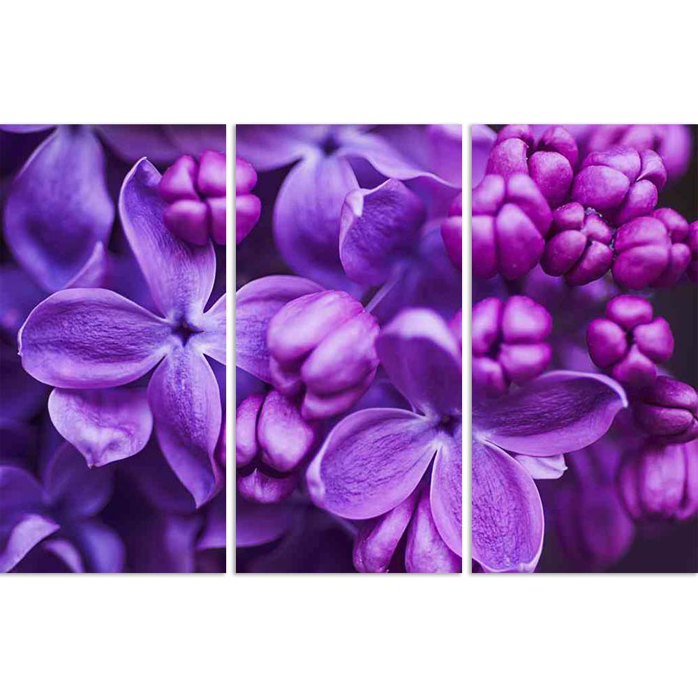 ArtzFolio Lilac Flowers Background Split Art Painting Panel on Sunboard-Split Art Panels-AZ5006590SPL_FR_RF_R-0-Image Code 5006590 Vishnu Image Folio Pvt Ltd, IC 5006590, ArtzFolio, Split Art Panels, Floral, Photography, lilac, flowers, background, split, art, painting, panel, on, sunboard, framed, canvas, print, wall, for, living, room, with, frame, poster, pitaara, box, large, size, drawing, big, office, reception, of, kids, designer, decorative, amazonbasics, reprint, small, bedroom, scenery, macro, head