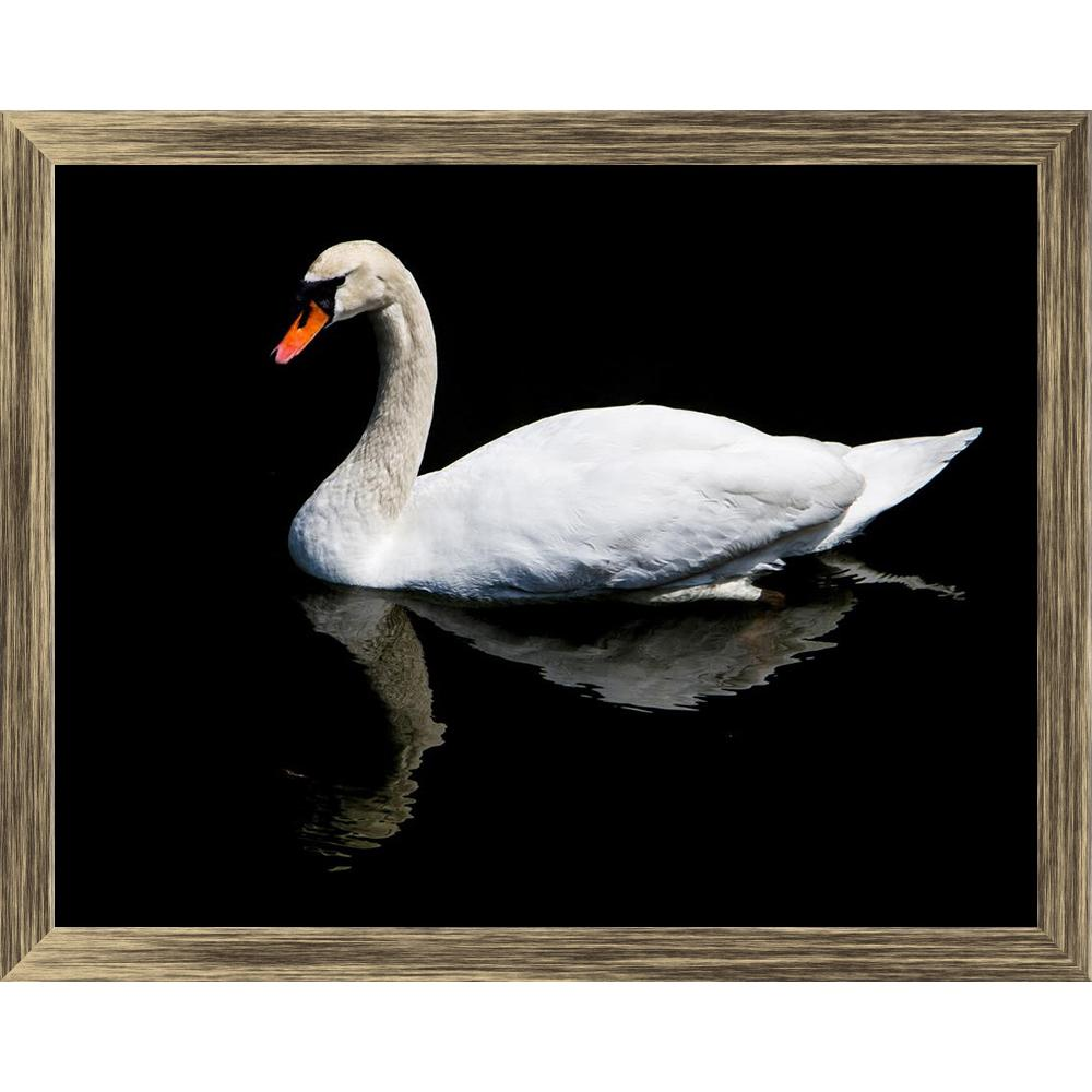 ArtzFolio White Swan Reflected In The Lake Canvas Painting-Paintings Wooden Framing-AZ5006738ART_FR_RF_R-0-Image Code 5006738 Vishnu Image Folio Pvt Ltd, IC 5006738, ArtzFolio, Paintings Wooden Framing, Birds, Photography, white, swan, reflected, in, the, lake, canvas, painting, framed, print, wall, for, living, room, with, frame, poster, pitaara, box, large, size, drawing, art, split, big, office, reception, of, kids, panel, designer, decorative, amazonbasics, reprint, small, bedroom, on, scenery, adult, a