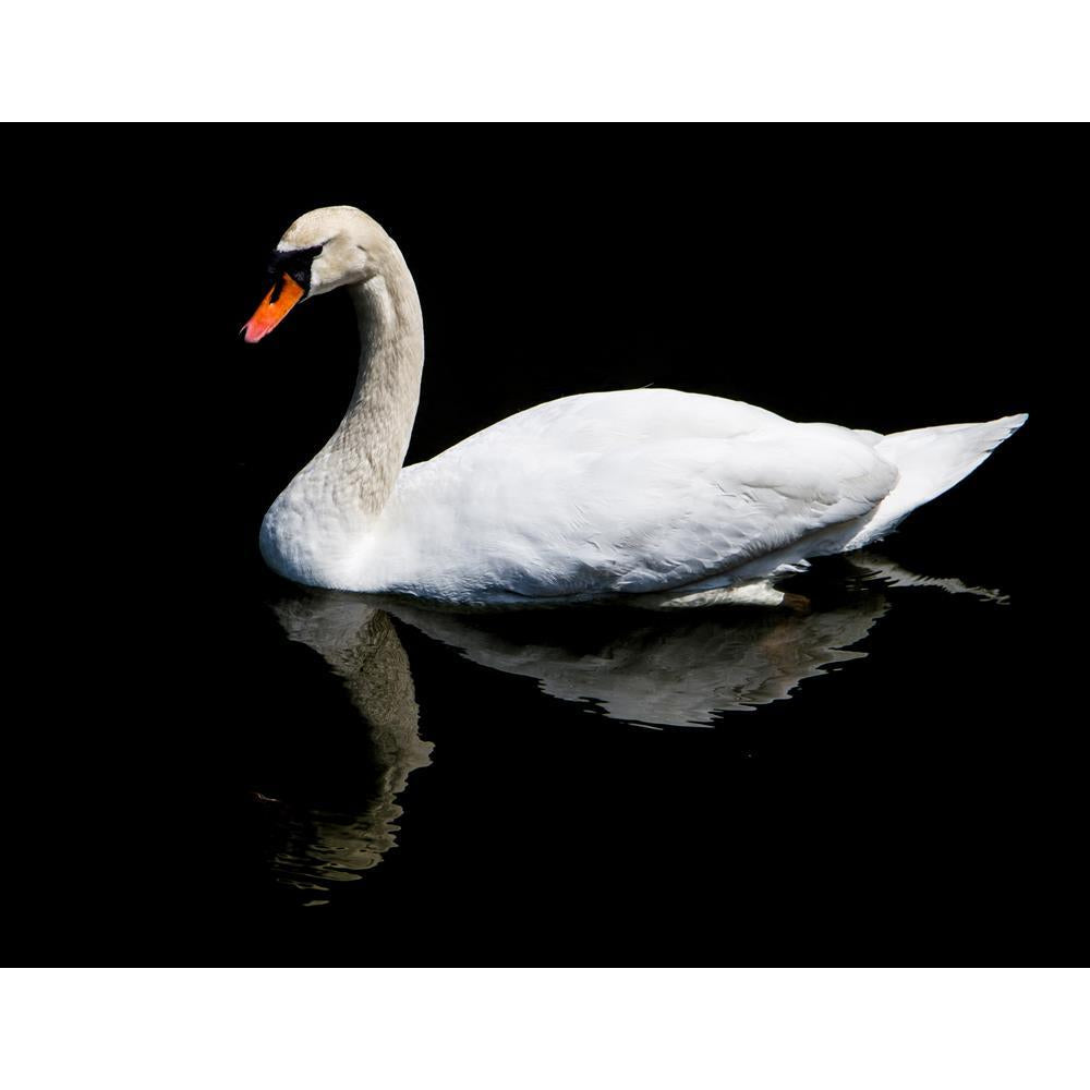 ArtzFolio White Swan Reflected In The Lake Unframed Premium Canvas Painting-Paintings Unframed Premium-AZ5006738ART_UN_RF_R-0-Image Code 5006738 Vishnu Image Folio Pvt Ltd, IC 5006738, ArtzFolio, Paintings Unframed Premium, Birds, Photography, white, swan, reflected, in, the, lake, unframed, premium, canvas, painting, large, size, print, wall, for, living, room, without, frame, decorative, poster, art, pitaara, box, drawing, amazonbasics, big, kids, designer, office, reception, reprint, bedroom, panel, pane