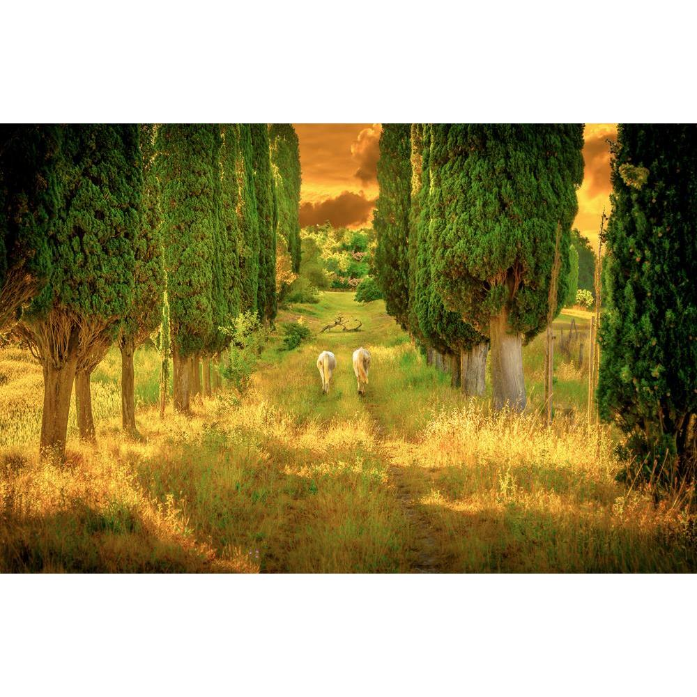 ArtzFolio Wild Horses Amongst High Tuscan Cypress Trees Unframed Premium Canvas Painting-Paintings Unframed Premium-AZ5007079ART_UN_RF_R-0-Image Code 5007079 Vishnu Image Folio Pvt Ltd, IC 5007079, ArtzFolio, Paintings Unframed Premium, Animals, Landscapes, Photography, wild, horses, amongst, high, tuscan, cypress, trees, unframed, premium, canvas, painting, large, size, print, wall, for, living, room, without, frame, decorative, poster, art, pitaara, box, drawing, amazonbasics, big, kids, designer, office,