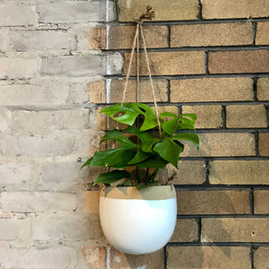 "Load image into Gallery viewer, Hanging pot (Fits 6"" plants)"