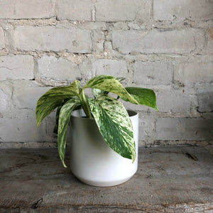 "Load image into Gallery viewer, Ceramic pot (Fits 4"" plants)"