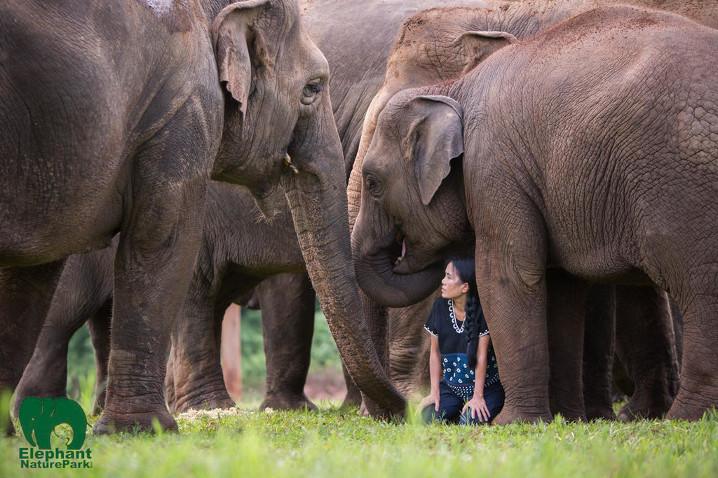 Lek with elephants in Chiang Mai Thailand