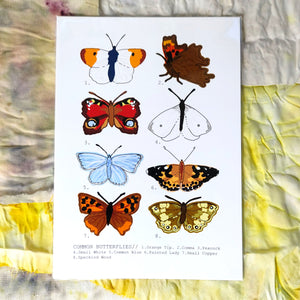 Common Butterflies Print