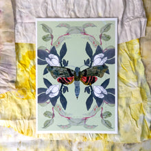 Load image into Gallery viewer, Lepidoptera Moth Print