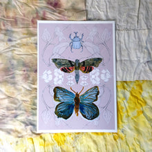Load image into Gallery viewer, Butterfly, Moth and Rhino Beetle Print