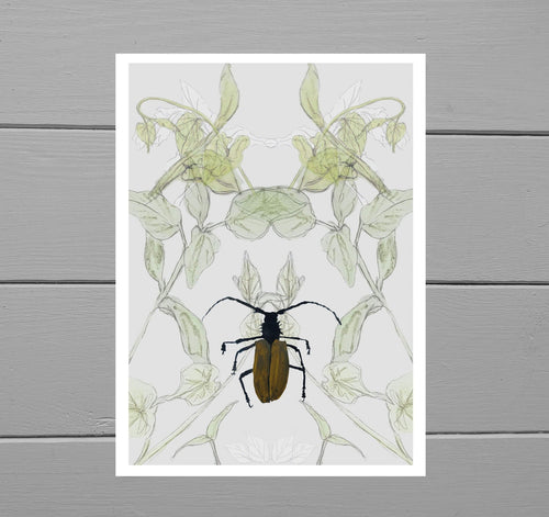 Titan Beetle, Bindweed and Pepper Seedlings Print - Duck Egg Designs Co