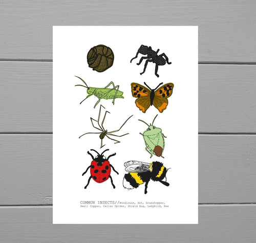 Common Insects Print. Art print showing eight common insects found in the UK (woodlouse, ant, grasshopper, small copper butterfly, cellar spider, shield bug, ladybird and bumblebee). Featuring the insects in rows of two across, the names of each are at the bottom of the print. Behind the print is a grey wooden plank background. Simple illustrations show the main characteristics of each insect, helping to identify them in real life. Duck Egg Designs Co