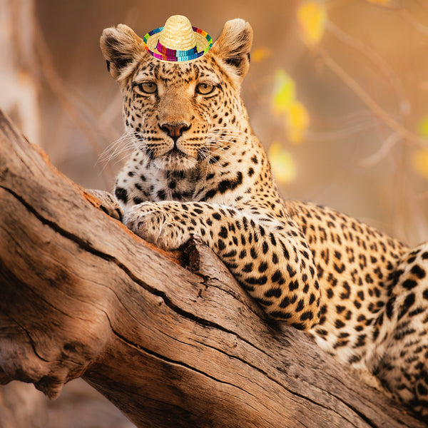 Big Cats Tiny Hats 2021 Calendar