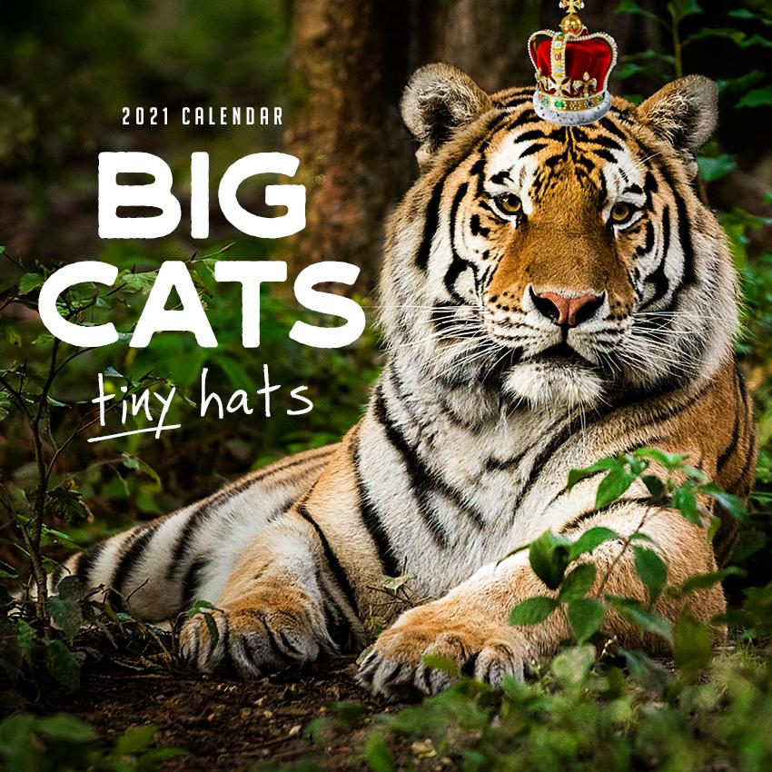 Paper Pocket - Big Cats Tiny Hats 2021 Calendar