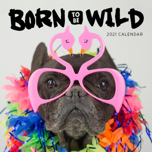 Paper Pocket - Born to be Wild 2021 Calendar